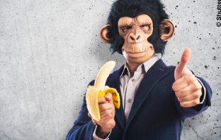 Affen sind die besseren Anlageberater