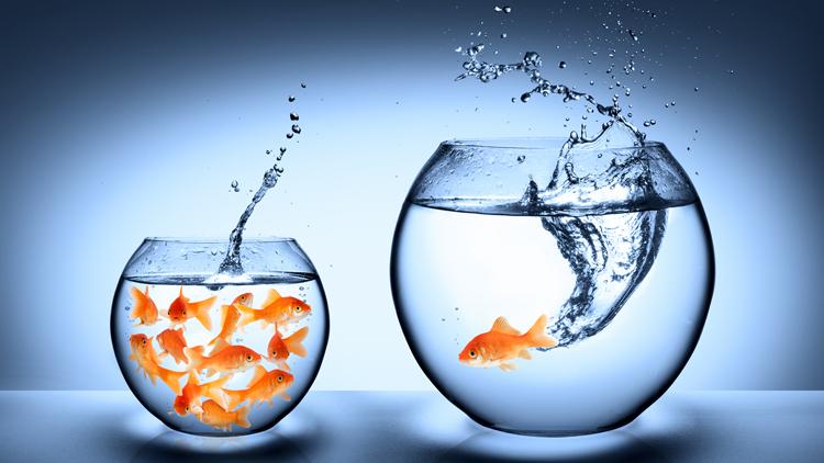 Erfolgsfaktor Markenbildung bei Banken und Sparkassen