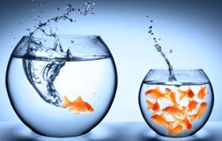 Nonkonformismus und Erfolg