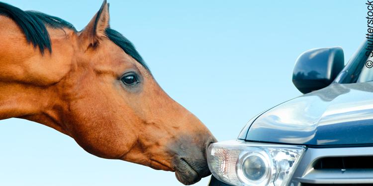 Autos oder Pferde: ein Beitrag zur Digitalisierung der Banken