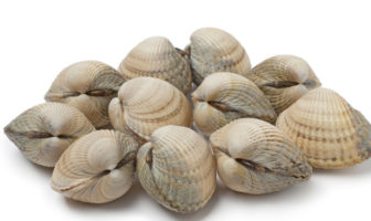 Muscheln wurden früher zum Bezahlen verwendet