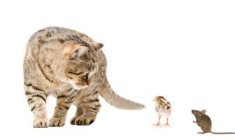 Holt die Katze Maus und Vogel?