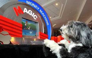 Hund vor einer Geldzählmaschine der Metrobank