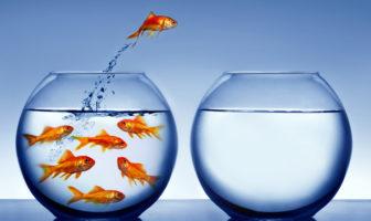 Fische und Führung