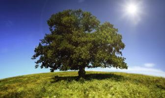Risiken durch den Klimawandel für Unternehmen