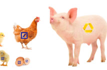 Fusion Deutsche Bank – Commerzbank