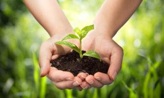 Nachhaltigkeitsstrategien für Banken und Sparkassen