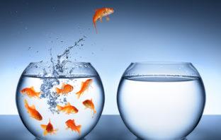 Mut und Experimente als wichtige Innovationstreiber im Banking