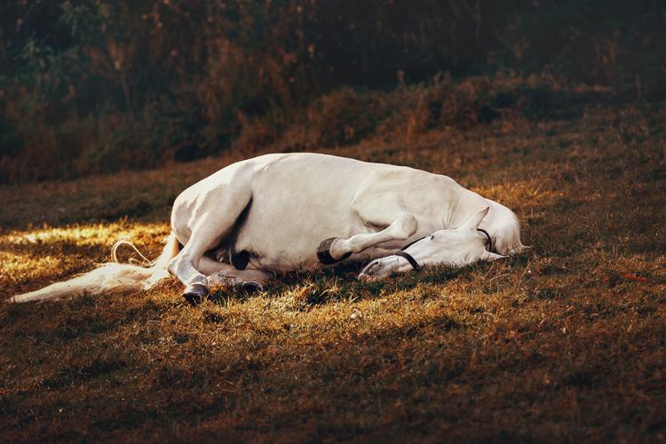Was Banken und Sparkassen von Pferden lernen können