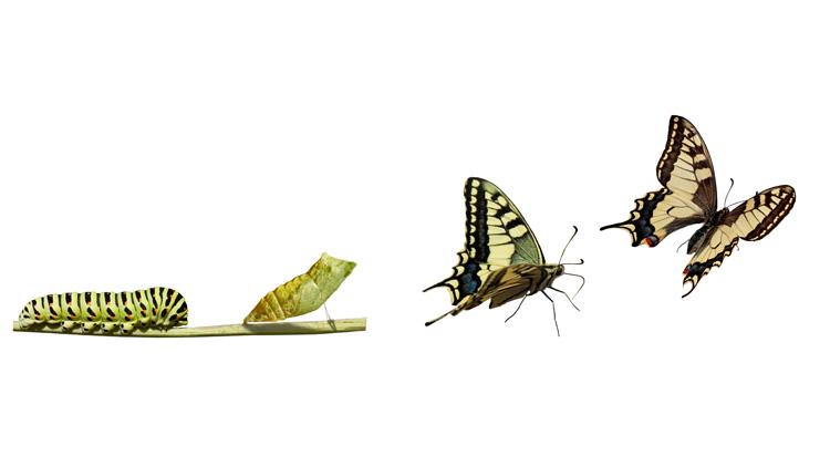 Schnelle und flexible Anpassung sind überlebenswichtig