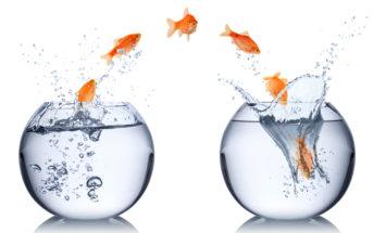 Agile Transformation setzt einen Kulturwandel voraus