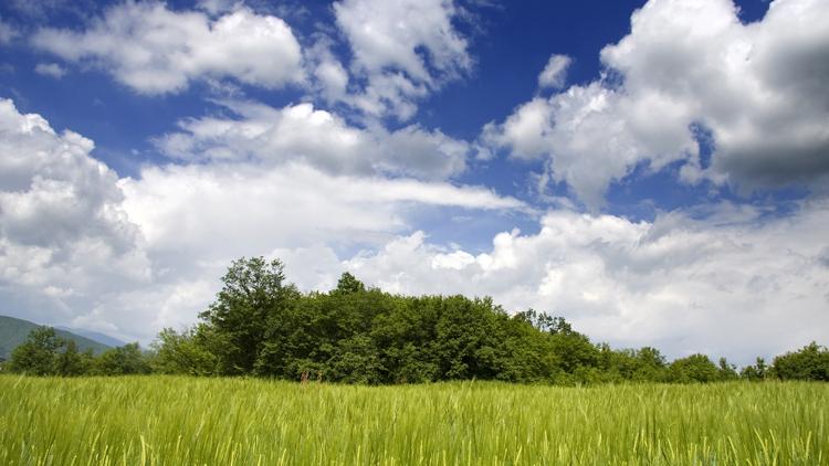 Klimaschutz und Ressourcenschonung im Banking