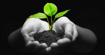 Nachhaltigkeit in der Asset-Allokation